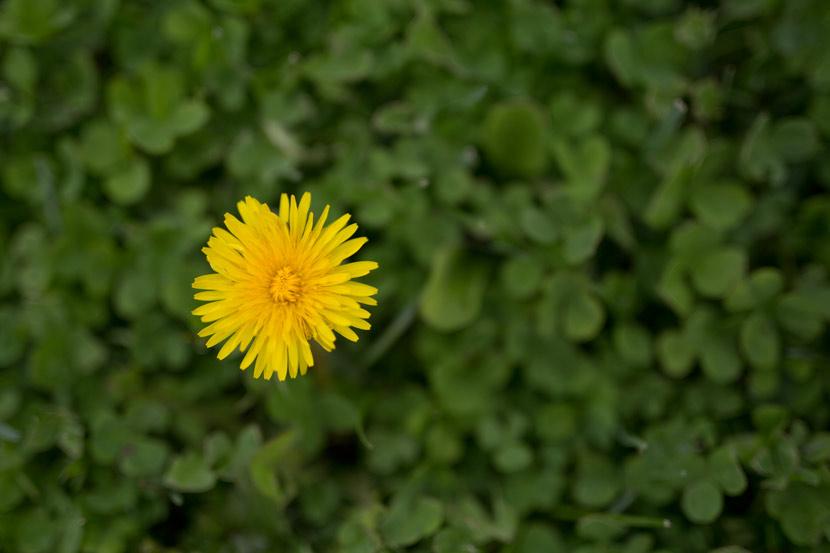 Sigma-50mm-Flower